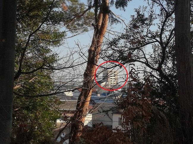 高鴨神社風景