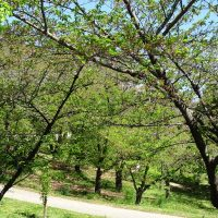 三崎公園の若葉