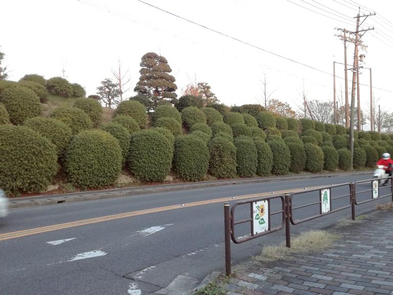 豊明中学校 ツツジ(愛知県)