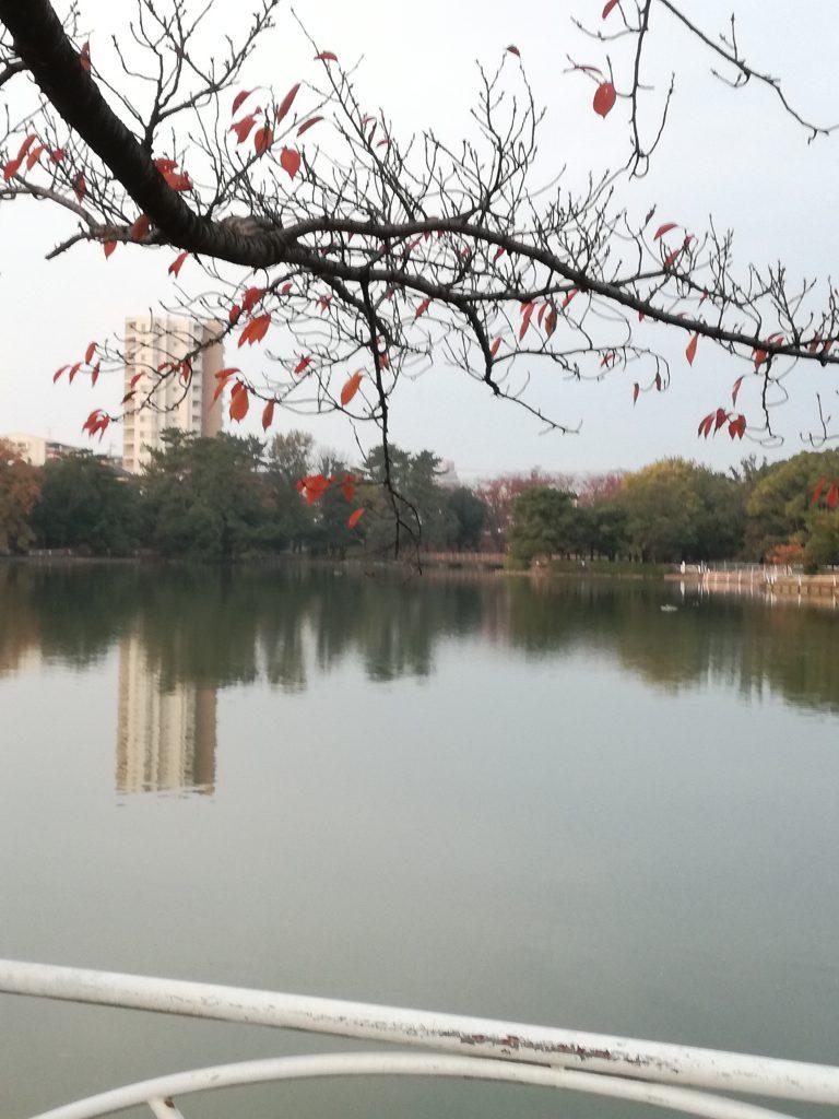三崎公園2(豊明市)