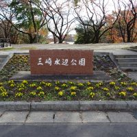 三崎公園 花壇 ビオラ