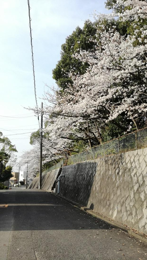 豊明市の桜 高鴨神社