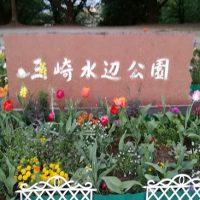 三崎公園の花壇