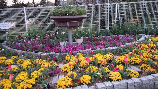 三崎公園花壇