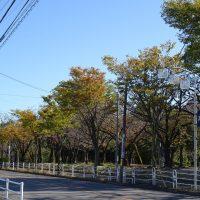 三崎公園 紅葉2019