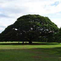 ハワイオアフ島モアナルアガーデン