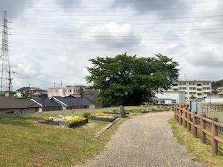 ookuraike1