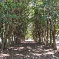 大府みどり公園緑のトンネル